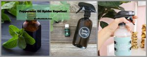 DIY Peppermint Oil Spider RepellentDIY Peppermint Oil Spider Repellent