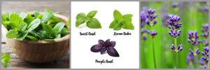 Plants Spider Repellent